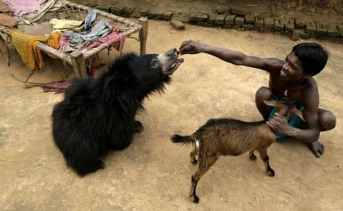 TOP Cele mai frumoase fotografii cu animale ale anului 2012! GALERIE FOTO19