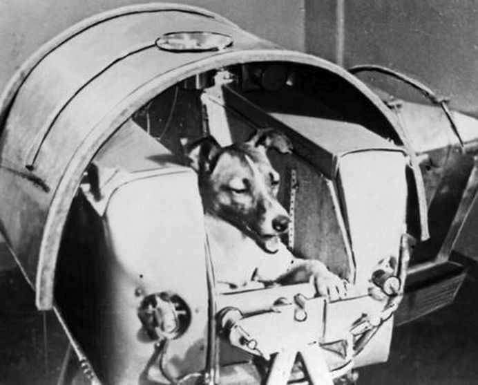 Laika, the space dog, aboard Sputnik II in November 1957.