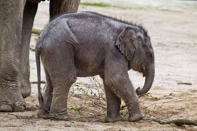 Statia de procreatie Speciile cu cele mai ciudate sarcini! GALERIE FOTO10