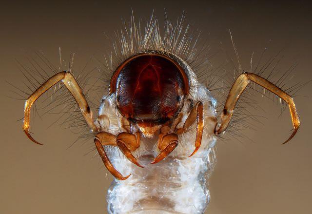 Cele mai frumoase IMAGINI MICROSCOPICE din 20139