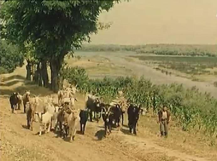 IMAGINI DE COLECTIE cu Delta Dunarii sau PARADISUL PENTRU ORICE PESCAR, intr-un reportaj britanic din 1962! VIDEO1