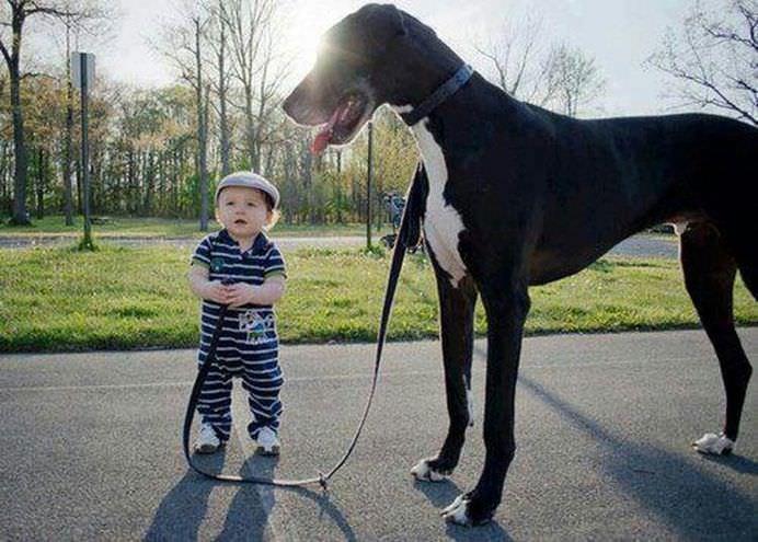 IMAGINI EMOTIONANTE care demonstreaza cat de mult au nevoie copii de ANIMALE DE COMPANIE!22
