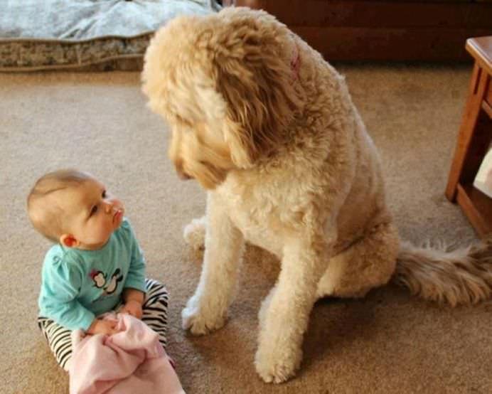 IMAGINI EMOTIONANTE care demonstreaza cat de mult au nevoie copii de ANIMALE DE COMPANIE!3