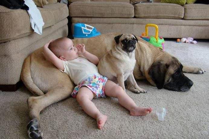 IMAGINI EMOTIONANTE care demonstreaza cat de mult au nevoie copii de ANIMALE DE COMPANIE!7