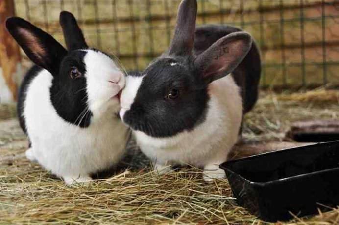 IMAGINI ROMANTICE cu POVESTI DE IUBIRE din lumea animalelor!13