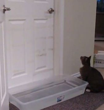 Cum ar fi sa ai o PISICA de neoprit Iti arata noi cum este sa o ai in casa! VIDEO