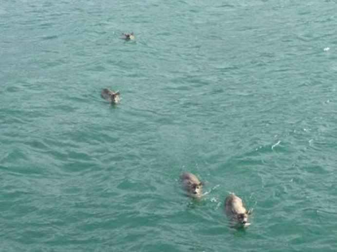 OPERATIUNE DE SALVARE INCREDIBILA Cauta delfini, dar a gasit cu totul altceva! GALERIE FOTO1