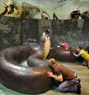 Temutul sarpe TITANOBOA, stramosul lui BOA si ANACONDA care a trait acum 60 de milioane de ani!2