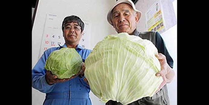 SEMNELE dezastrului NUCLEAR de la Fukushima se vad cu ochii deschisi! Localnicii sunt SOCATI de legumele si fructele MUTANT!14