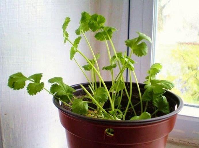 Opt legume pe care le poti creste la infinit in casa ta!1