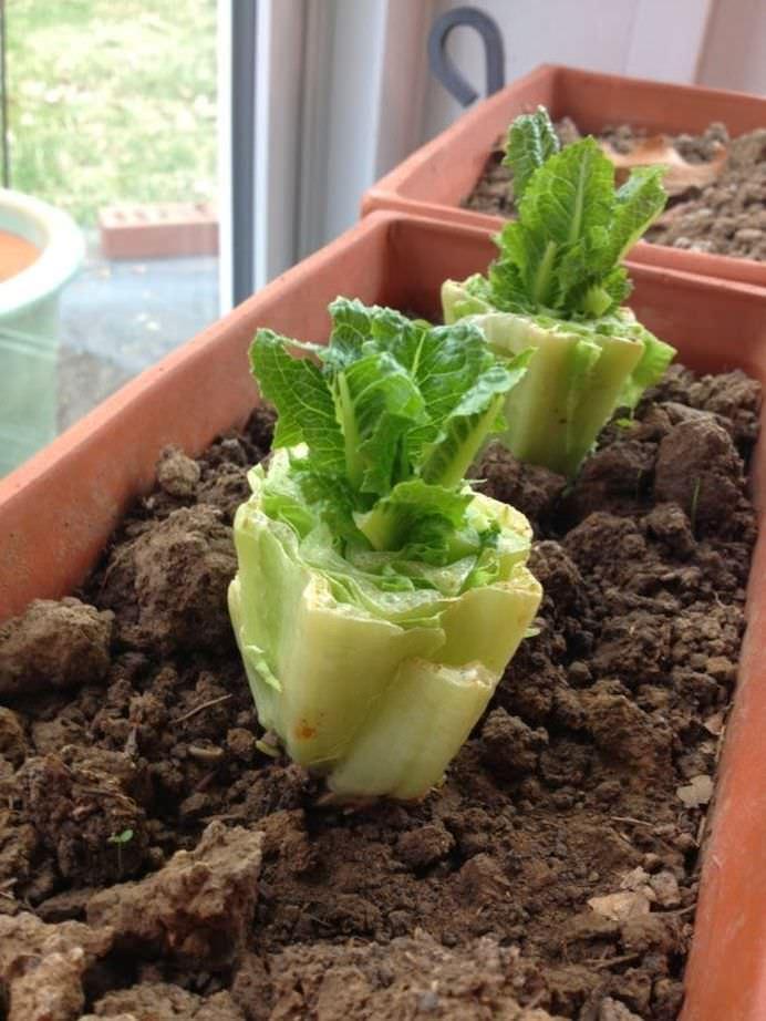 Opt legume pe care le poti creste la infinit in casa ta!2