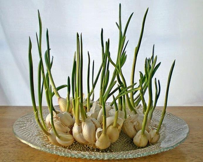 Opt legume pe care le poti creste la infinit in casa ta!7