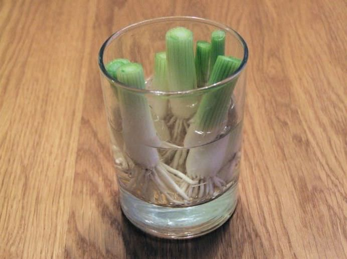 Opt legume pe care le poti creste la infinit in casa ta!8