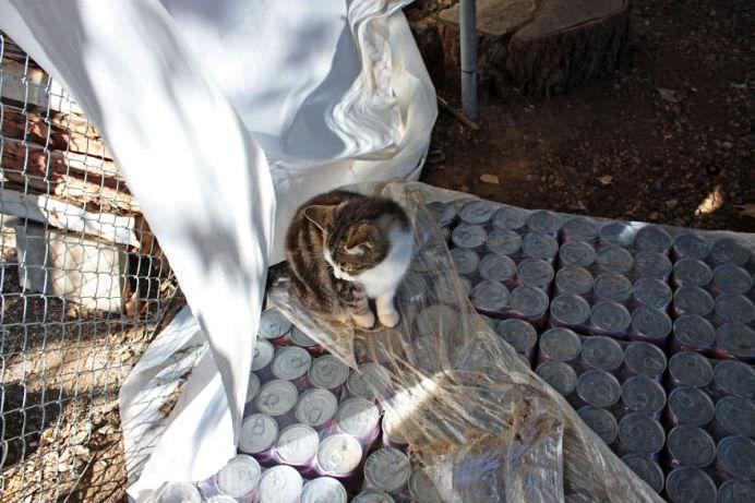 Un adevarat SANCTUAR FELIN! In ce si-a transformat casa o femeie iubitoare de pisici! GALERIE FOTO14